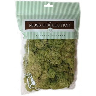 Preserved Reindeer Moss 108.5 Cubic InchesSpring Green
