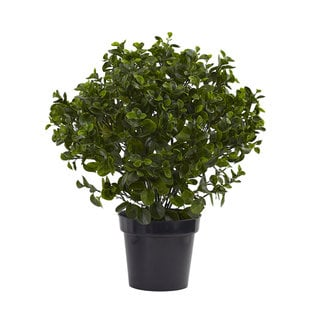 28-inch Peperomia Plant UV Resistant (Indoor/Outdoor)