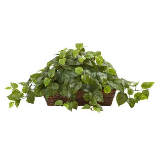 Pothos w/Ledge Basket