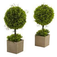 Boxwood Topiary w/Planter (Set of 2)