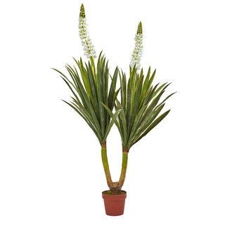 57-inch Flowering Yucca Plant