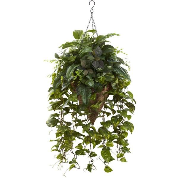 Vining Mixed Greens w/Cone Hanging Basket