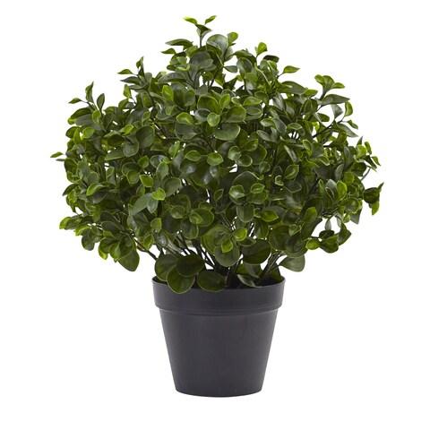 23-inch Peperomia Plant UV Resistant (Indoor/Outdoor)