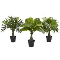 Areca, Fountain & Banana Palm (Set of 3)