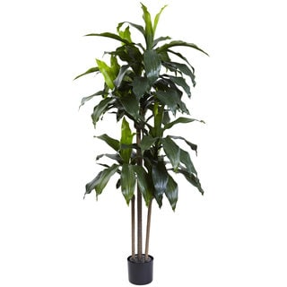 5-foot Dracaena Plant UV Resistant (Indoor/Outdoor)