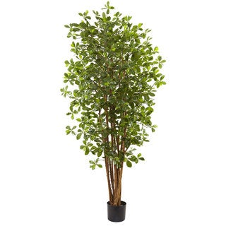 6-foot Black Olive Silk Tree