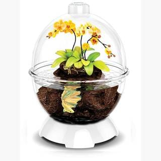 BioBubble Wonder Bubble Terrarium