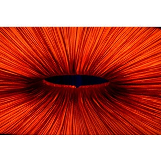 Wall Decor Prints 'Red Black Hole' Print Wall Art