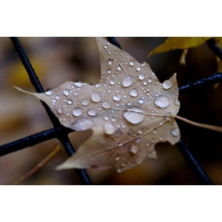 Wall Decor Prints 'Leaf Droplets' Print Wall Art