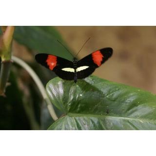 Aviator Butterfly Print Wall Art