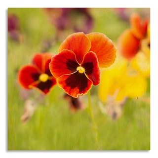 Gallery Direct Flowers pansy' Printed on Birchwood Wall Art
