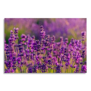 Gallery Direct Lavender field in Tihany, Hungary' Printed on Birchwood Wall Art