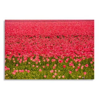 Gallery Direct Beautiful pink tulips during sunny day in summer' Printed on Birchwood Wall Art