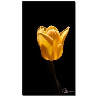 Martha Guerra 'Tulip Blooms III' 22x32 Canvas Wall Art