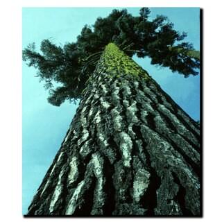 Kurt Shaffer 'A Tree of Life' 18x24 Canvas Wall Art