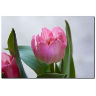 Martha Guerra 'Pink Tulip III' 16x24 Canvas Wall Art