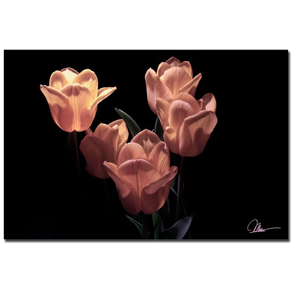 Martha Guerra 'Pink Blooms' 16x24 Canvas Wall Art