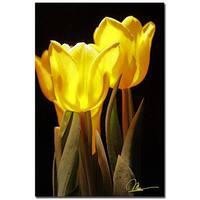 Martha Guerra 'Yellow Tulips II' 16x24 Canvas Wall Art