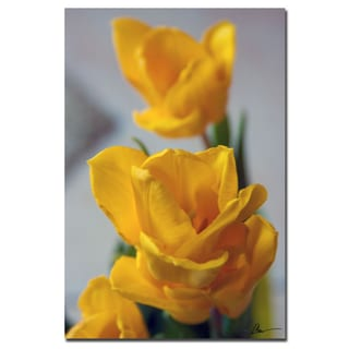 Martha Guerra 'Tulip Blooms IX' 16x24 Canvas Wall Art