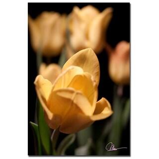 Martha Guerra 'Tulips Blooms VIII' 16x24 Canvas Wall Art