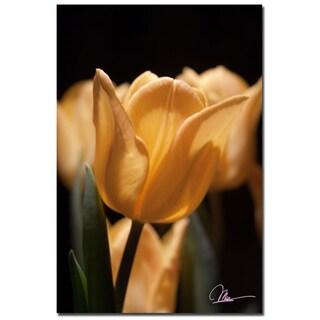 Martha Guerra 'Tulips Blooms VII' 16x24 Canvas Wall Art