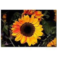 Martha Guerra 'Sunflowers XI' 16x24 Canvas Wall Art