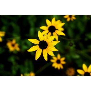 Lil Sunflowers Print Wall Art
