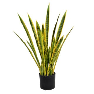 35-inch Tall Snake Plant (Sansevieria)