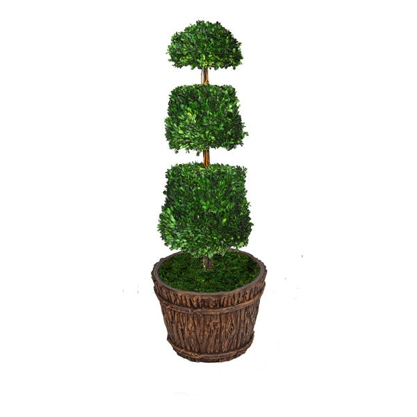 52-inch Tall Preserved Natural Boxwood Cone Topiary in Planter
