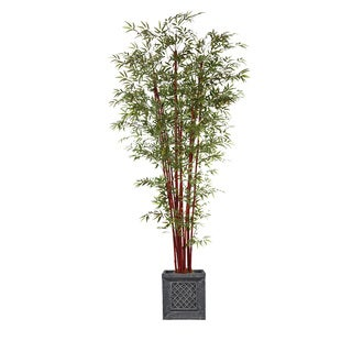 98-inch Tall Harvest Bamboo Tree in Planter