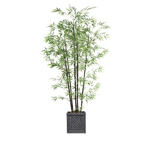 78-inch Tall Bamboo Tree in Planter