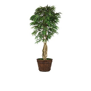 86-inch Tall Willow Ficus with Multiple Trunks in Planter