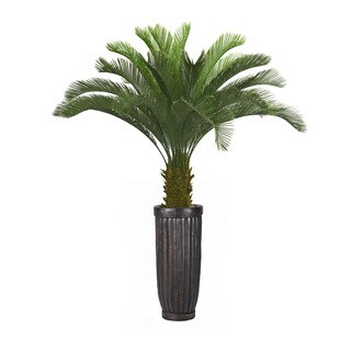 69-inch Tall Cycas Palm Tree in Planter