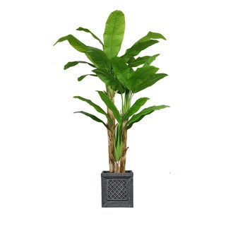 78-inch Tall Banana Tree with Real Touch Leaves in Planter
