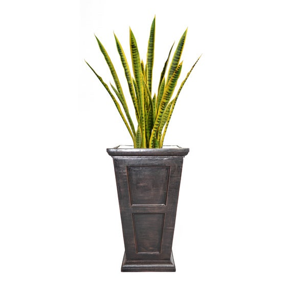54-inch Tall Snake Plant in Planter
