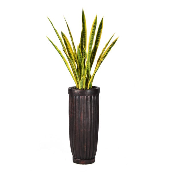 56-inch Tall Snake Plant in Planter