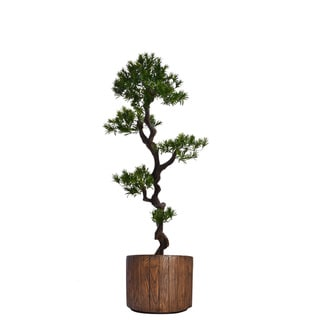 53-inch Tall Yacca Tree in Planter