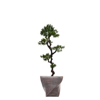 58-inch Tall Yacca Tree in Planter