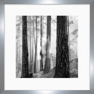 """Forest Landscapes Tracey Square Framed Photography 45"""" x 45"""""""