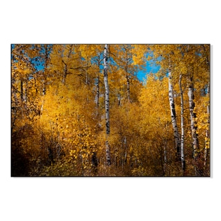 Gallery Direct Autumn Aspen Forest, Colorado Print on Metal Wall Art