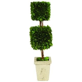 Boxwood Double Square Topiary