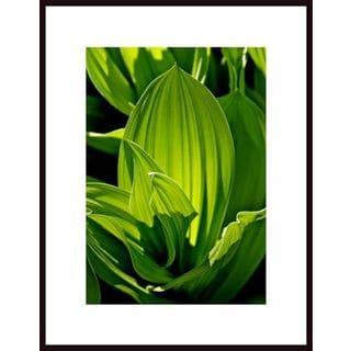 "John Nakata ""Corn Lily Abstract"" Framed Art"