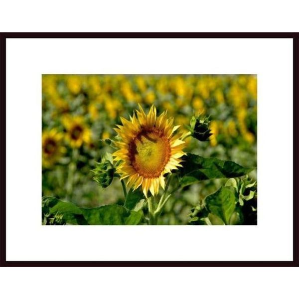John Nakata Sunflower Framed Art