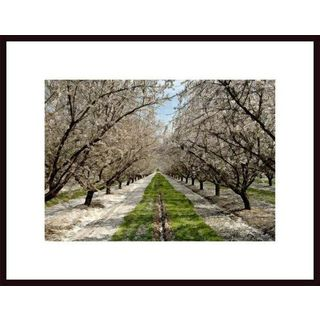 John Nakata 'Blossom Trail' Framed Art