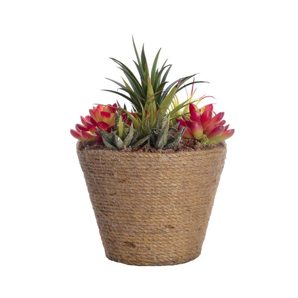 Succulents in Hemp Rope Container 10.5 Inches