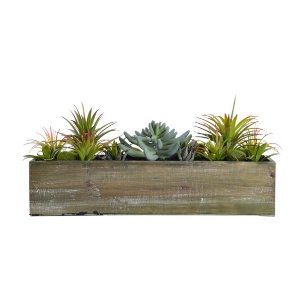 Laura Ashley 9-inch Succulents in Wooden Pot