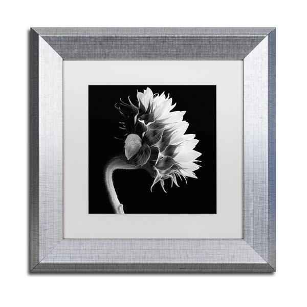Michael Harrison 'Sunflower' White Matte, Silver Framed Wall Art