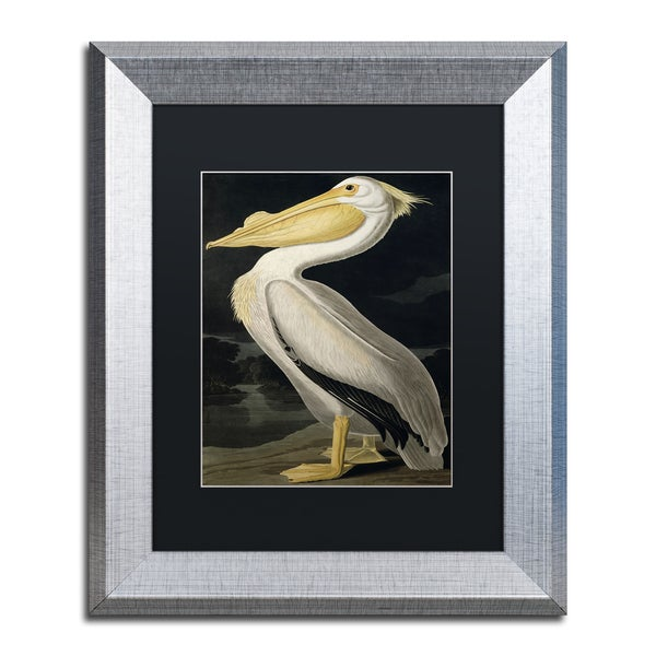 John James Audubon 'American White Pelican' Black Matte, Silver Framed Wall Art