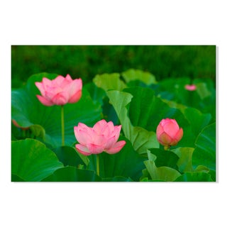 Gallery Direct Floral Lilypad Print on Birchwood Wall Art