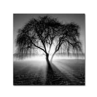 Moises Levy 'Lightning Tree I' Canvas Wall Art
